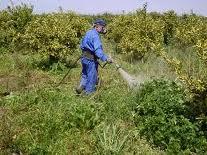Herbicida Extrazin SC