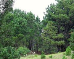 Árvores sobreviveram à Idade do Gelo na Escandinávia