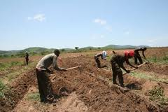 Seguro Multirisco Rural