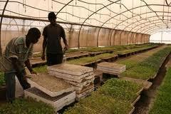 Рrojecto agro-industrial