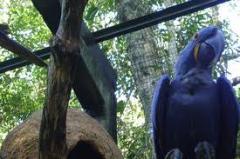 Pacote - Cataratas do Iguaçu-Bourbon Cataratas