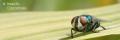 Insecto - Caçadores